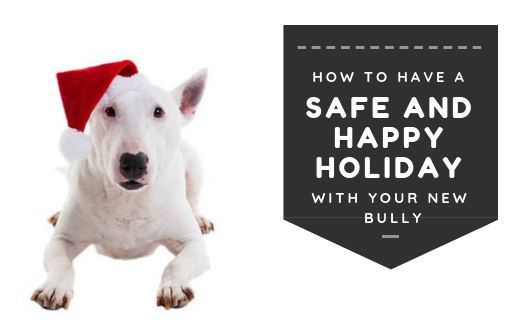 How to Have a Safe and Happy Holiday with Your New Bully